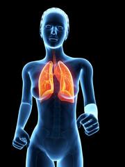 medical 3d illustration - jogging woman - visible lung