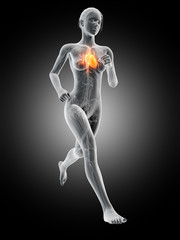 medical 3d illustration - female jogger with visible heart