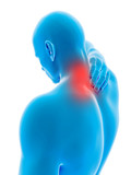 medical 3d illustration - male having pain in the neck