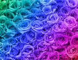 Colorful Roses. Background.
