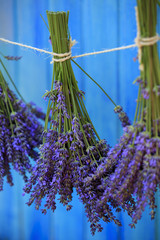 Lavender herbs drying in the garden