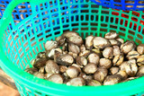 Clams in a bucket