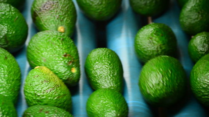 Hass avocados in packaging line, close up