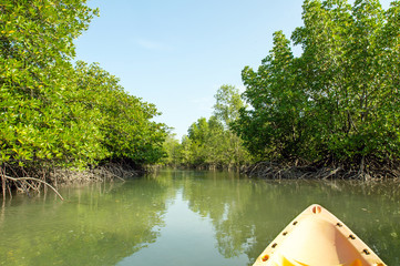 Kayaking through mangrove forest
