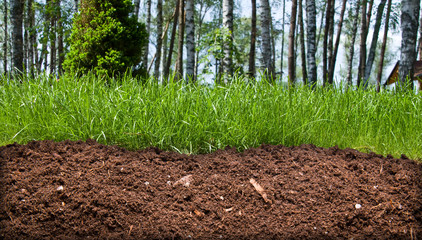 Slice of the soil with trees and grass
