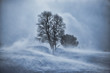 Постер, плакат: Tree in snow blizzard