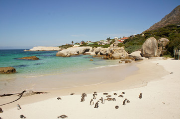 Pinguine Südafrika