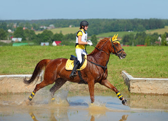 Rider on horse at equestrian event