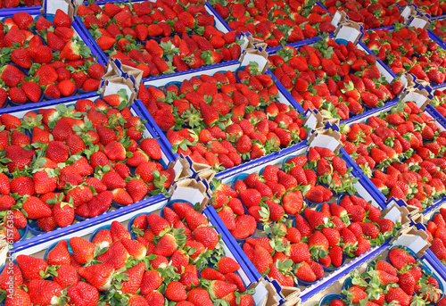 lots of boxes and trays of ripe red Strawberry for sale