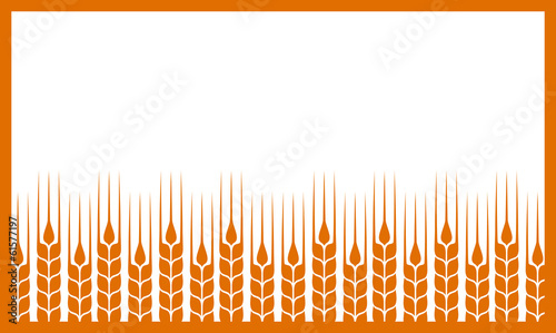 white background with wheat ears