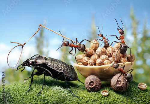 ants harnessing the bug, ant tales