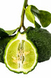 kaffir lime isolated