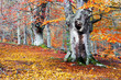 Forest in autumn with vivid colors