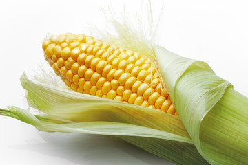 Corn on cob