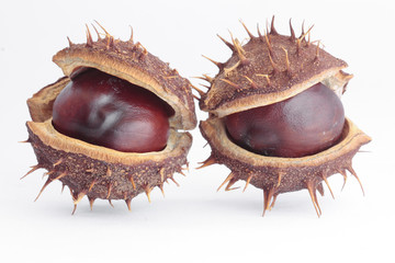 Chestnut pods