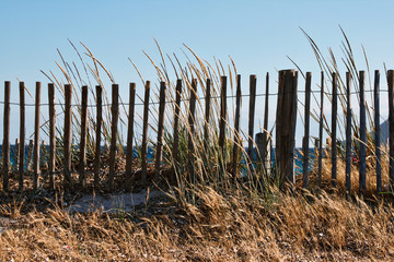 fence and high dry grass
