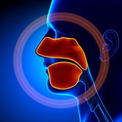 Sinuses - Human Anatomy