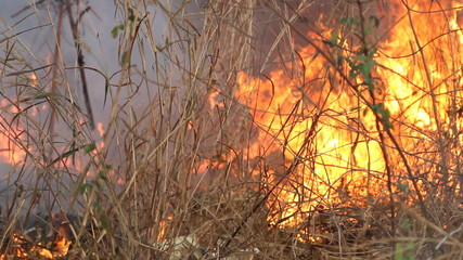 Fire and smoke on dry grass
