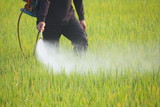 farmer spraying pesticide in the rice field poster