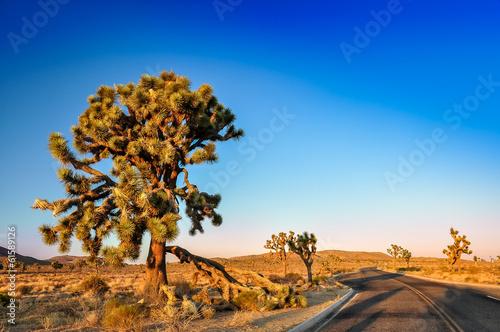 Joshua tree and desert road before sunset