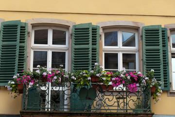 the window with shutters and flower pots