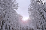 Snow covered forest with lens flare