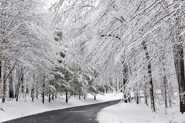 Road winding through a snow covered forest