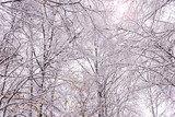 Snow covered tree canopy in forest
