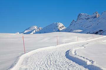 Alpine Walking Path