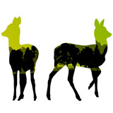 Doe venison deer animal silhouettes in wild nature forest landsc