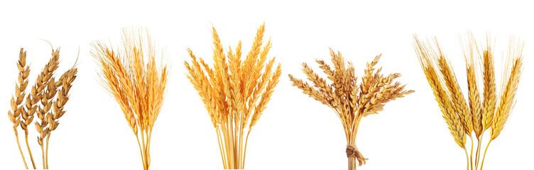 set of various wheat ears