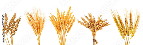 Plexiglas Aromatische set of various wheat ears