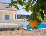 Orange tree and Villa