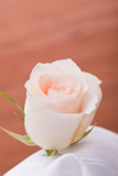single orange rose for wooden background