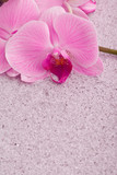 pink orchid on brilliance sand poster