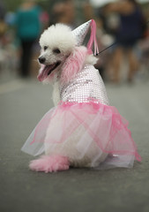 Dog in Princess Costume Rio Animal Carnival