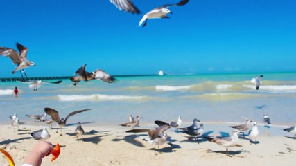 Feeding seagulls on a Yucatan Beach