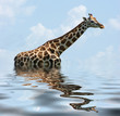 sunken Giraffe
