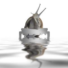Grapevine snail and razor blade
