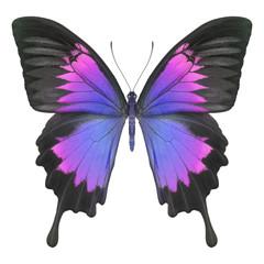 Schmetterling lila blau