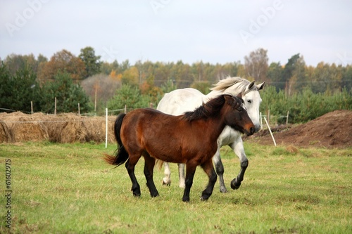 Pony and horse running together