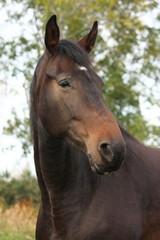 Beautiful brown horse portrait in autumn