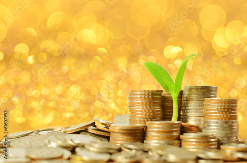 money coins pile and young tree