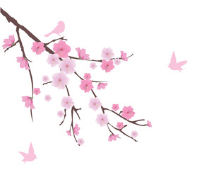 vector cherry blossom branch with birds
