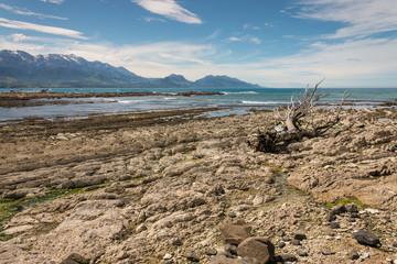 driftwood on Kaikoura coast