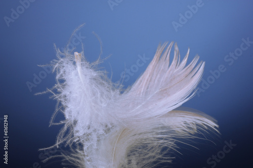 beautiful feather on blue background