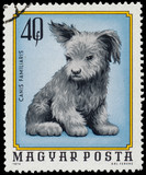 HUNGARY - CIRCA 1974: A stamp printed in Hungary shows image of