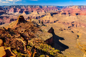 Scenic landscape view of Grand Canyon and dry tree