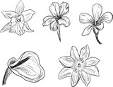 set of five flowers sketches isolated on white