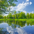 Sunny spring landscape by The Narew River. - 61618921